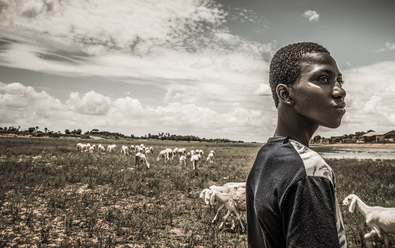 Boy with his goat herd on a dry river bed in Mali